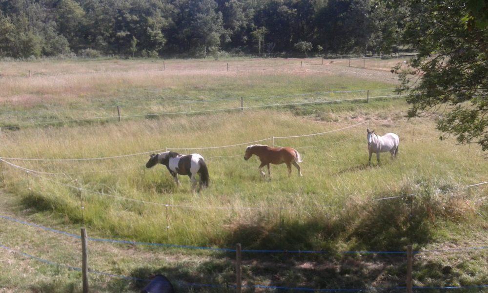 gite étape equestre chevaux logement couchage paddock paradise ecurie bedoin vaucluse randonnée cheval pieds velo course location