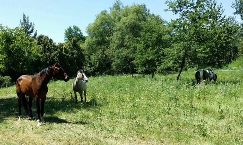 gite étape equestre chevaux logement couchage paddock paradise ecurie bedoin vaucluse randonnée cheval pieds velo course location weekend