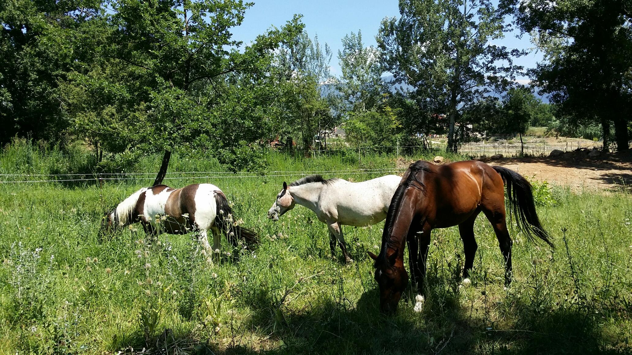 gite étape equestre chevaux logement couchage paddock paradise ecurie bedoin vaucluse randonnée cheval pieds velo course cheval passion