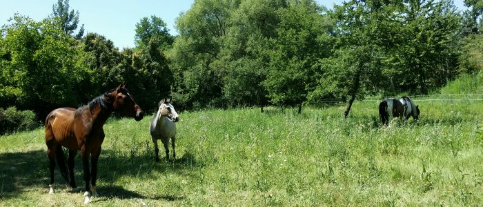 gite étape equestre chevaux logement couchage paddock paradise ecurie bedoin vaucluse randonnée cheval pieds velo course