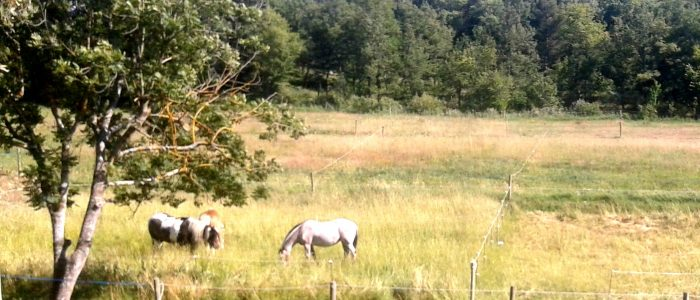 Paddock paradise grand gîte bédoin location vacances mont ventoux chevaux nature campagne piscine